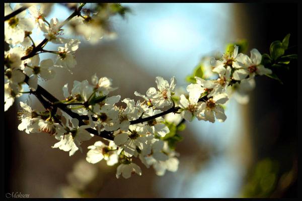 عاشقا خیز کامد بهاران