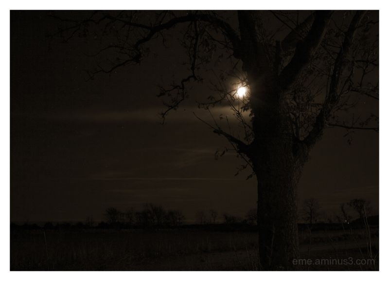 landscape, sepia, night