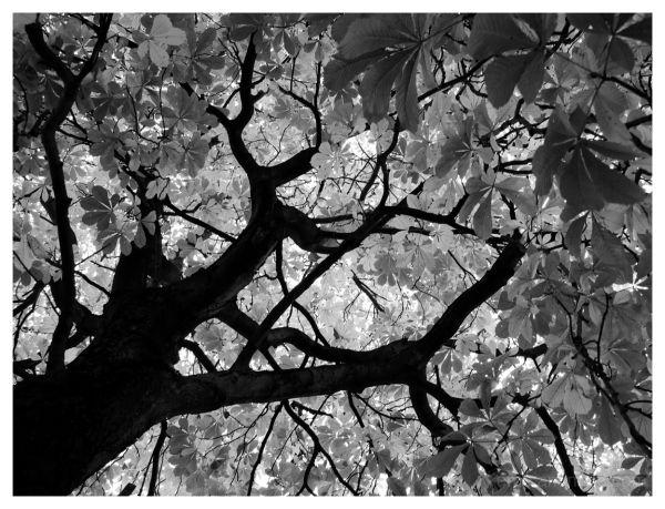 tree, black&white, nature