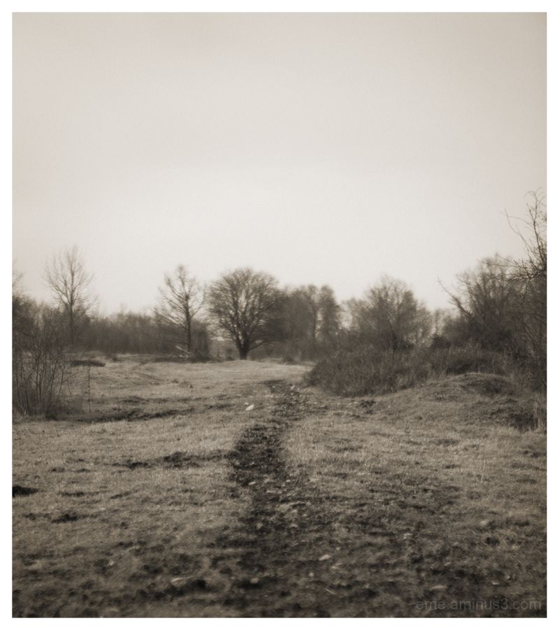 landscape, path, sepia, country side, öland