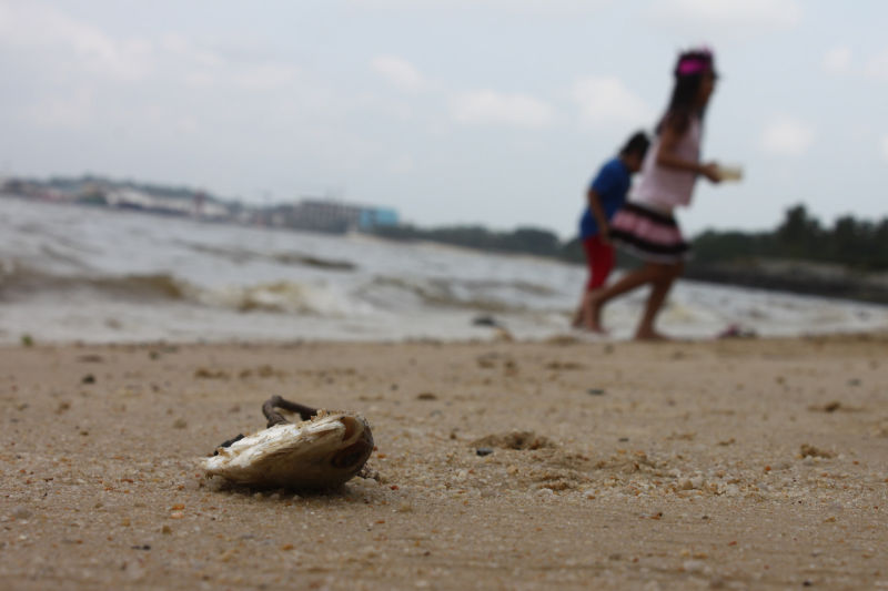 Mankind oblivious to marine pollution.