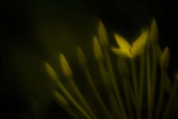 Imperfection - photos from a homemade lens.