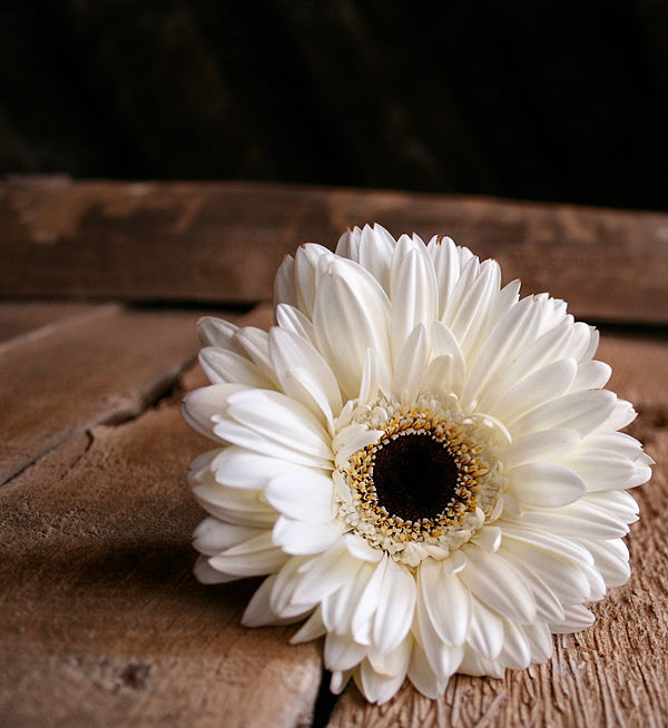 Flower !!
