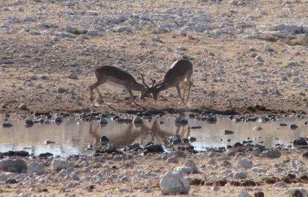 Springboks go head to head