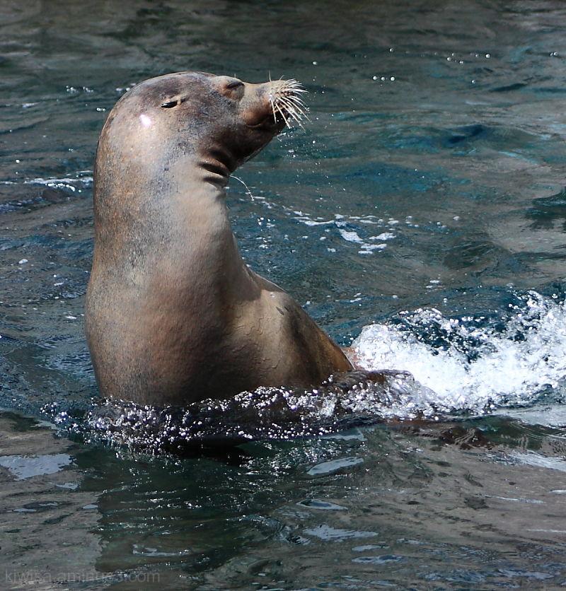 #2 Seal
