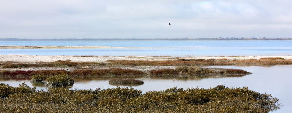 Miranda Bird Sanctuary
