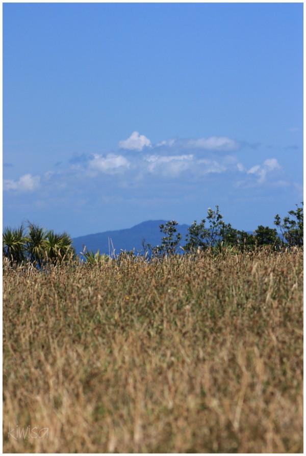View of Rangitoto from Tiritiri Matangi
