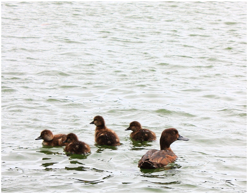 Family outing