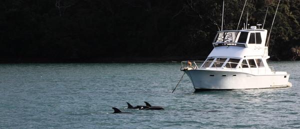 Visitors at Whangapara harbour