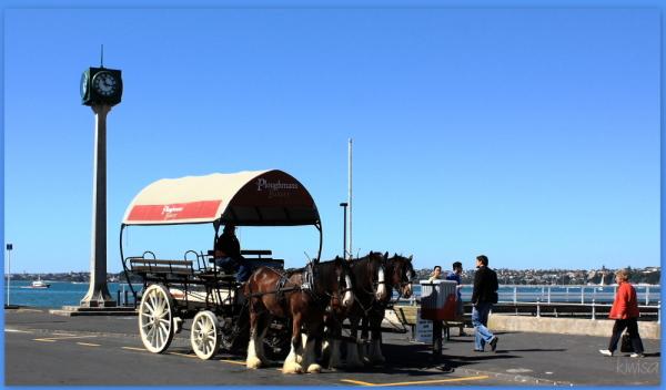 Devonport horses