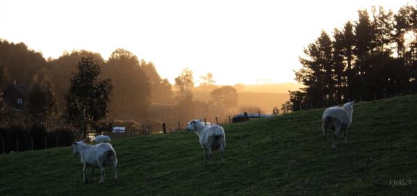 Pastoral sunset