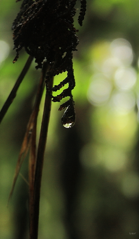 Waterdrop in the forest