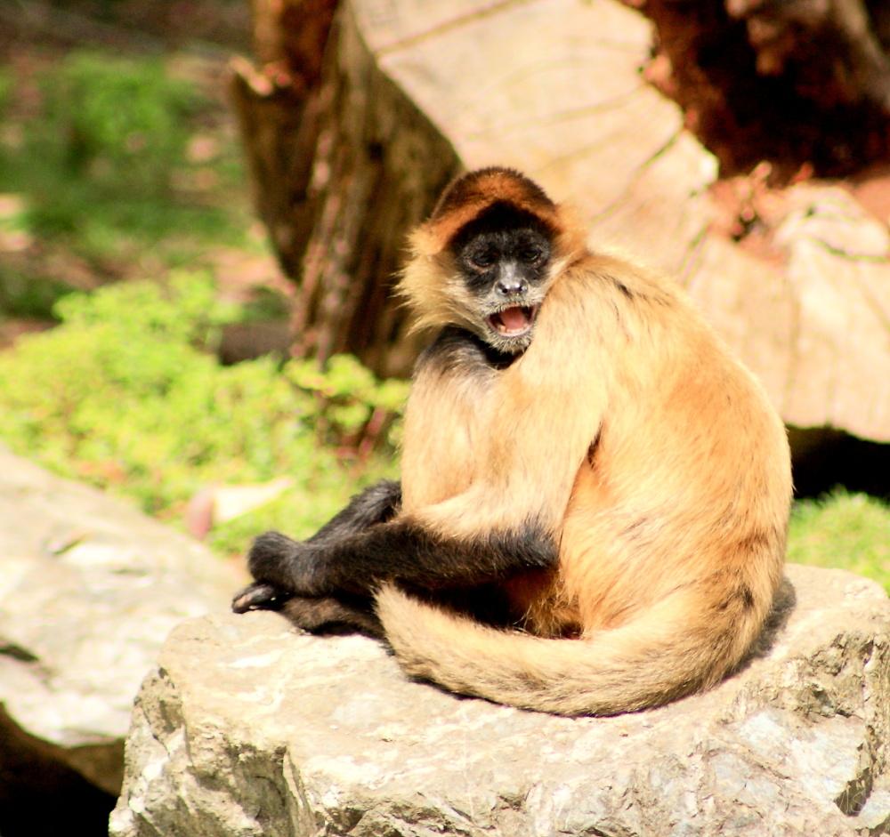 #5 Zoo:  Spider Monkey