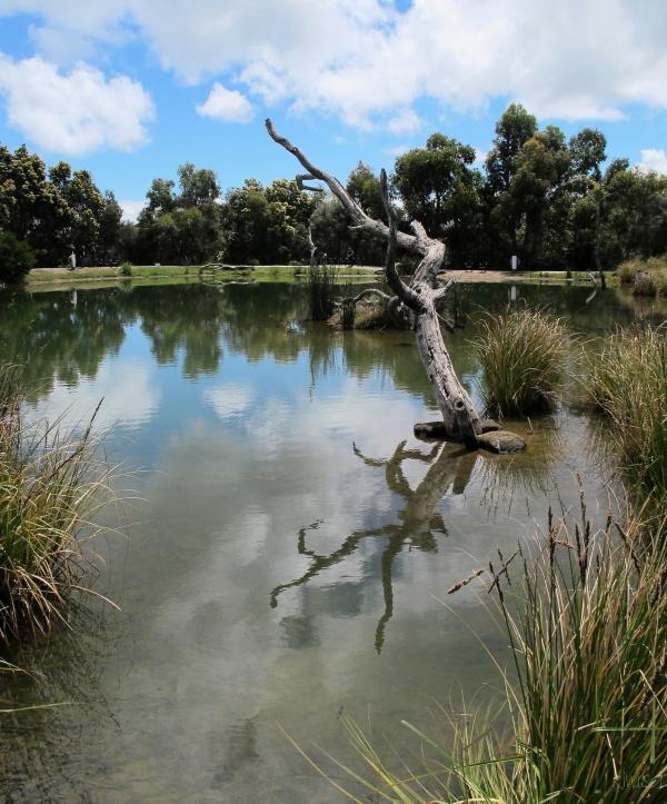 Trout farm reflections