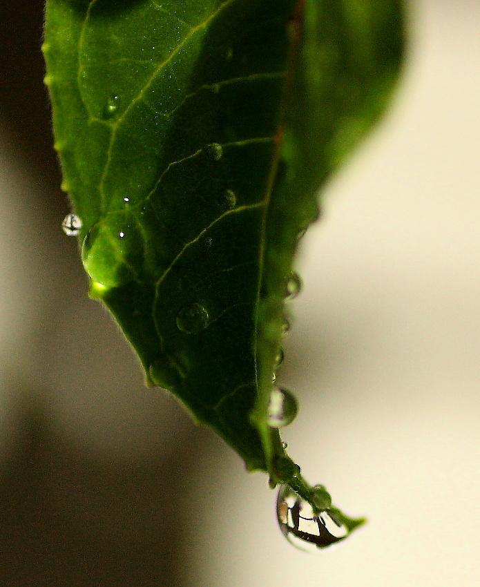 GreenLeaf waterdrop