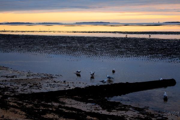Birds bathing at dawn