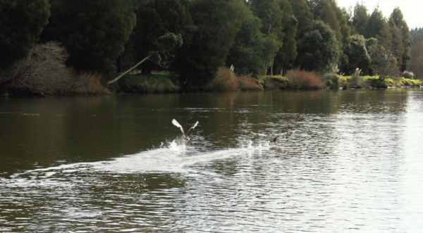 #3 Waikato Riverboat cruise