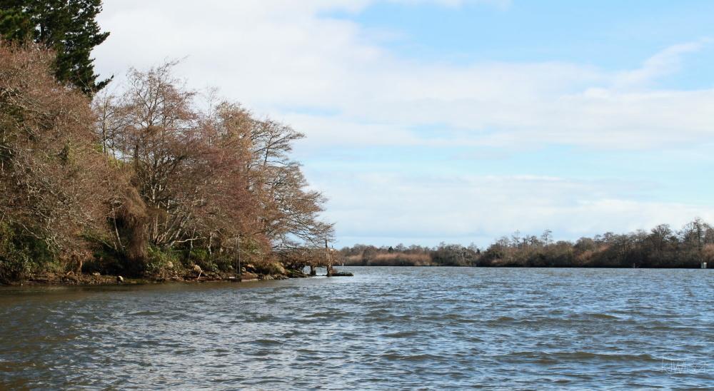 #5 Waikato Riverboat cruise