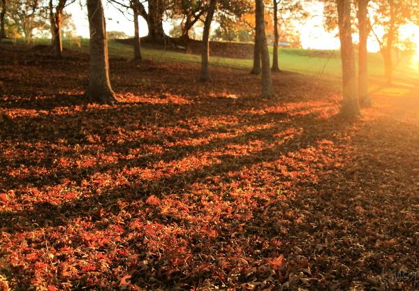 Autumn sunrays through the trees