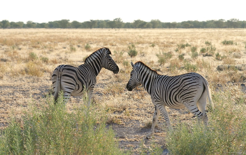 #1 Etosha National Park