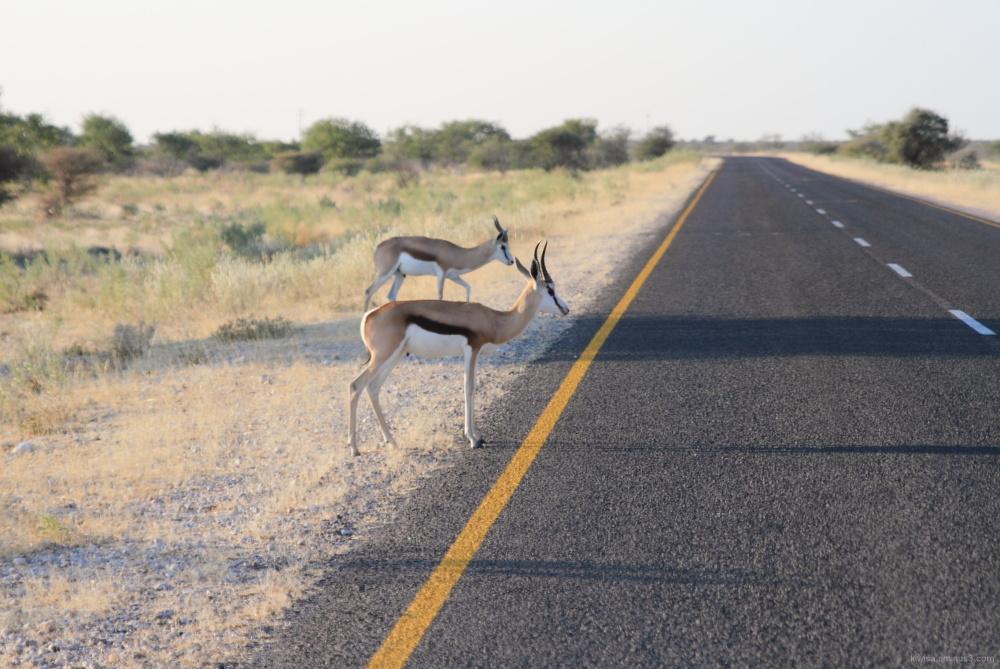 #2 Etosha National Park
