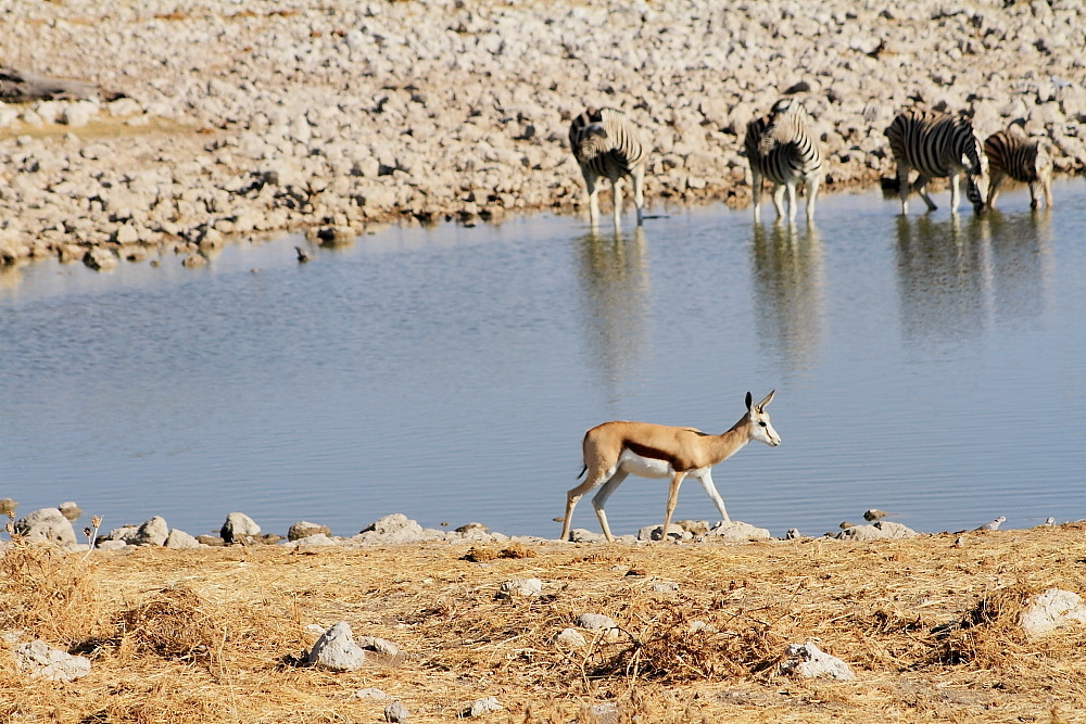 #8 Oukaukuejo- waterhole visitors