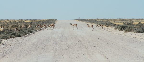 #1 Drive through Etosha National Park