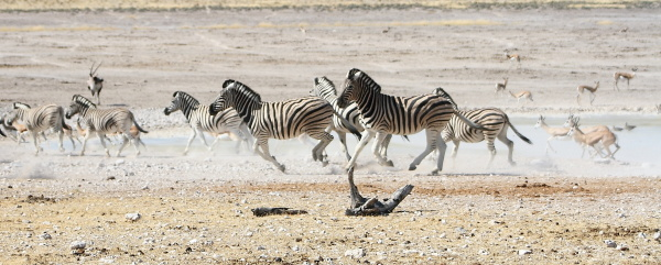 #6 Driving through Etosha National Park