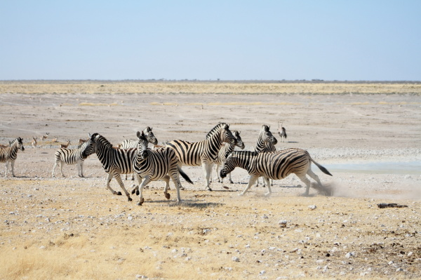 #7 Driving through Etosha National Park