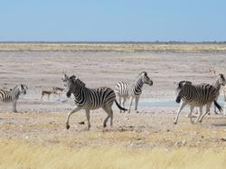 #12 Driving through Etosha National Park