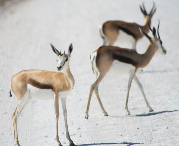 #15 Driving through Etosha National Park