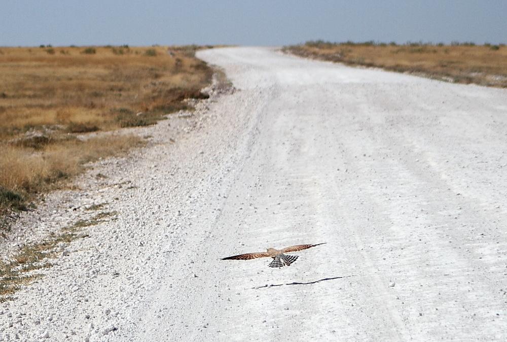 #17 Driving through Etosha National Park