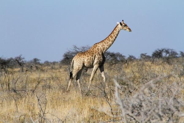 #19 Driving through Etosha National Park