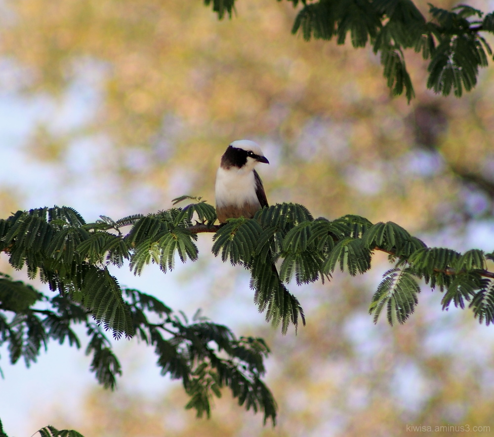 Onguma - bird