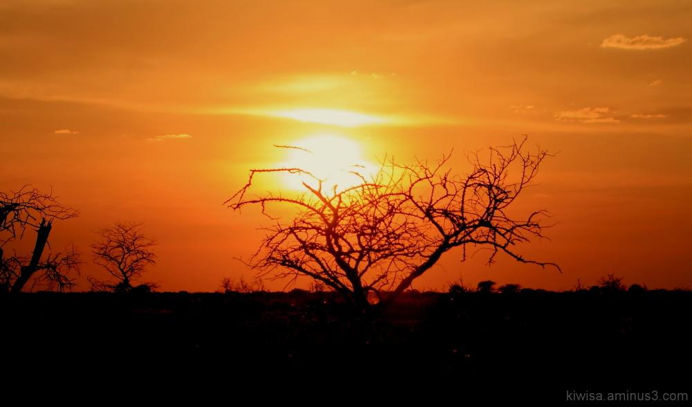 Onguma Game drive - sunset