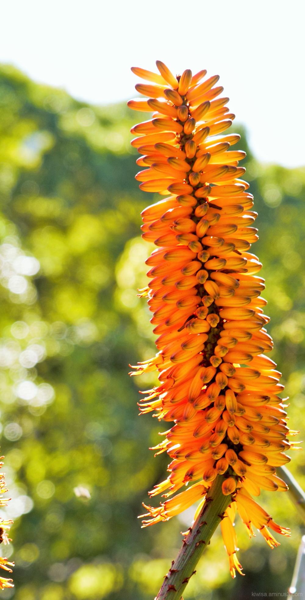 #2 Kirstenbosch