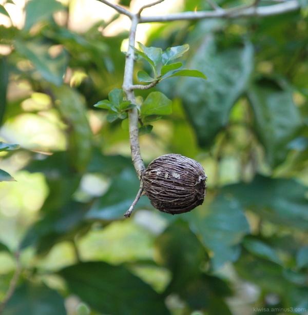 #4 Kirstenbosch