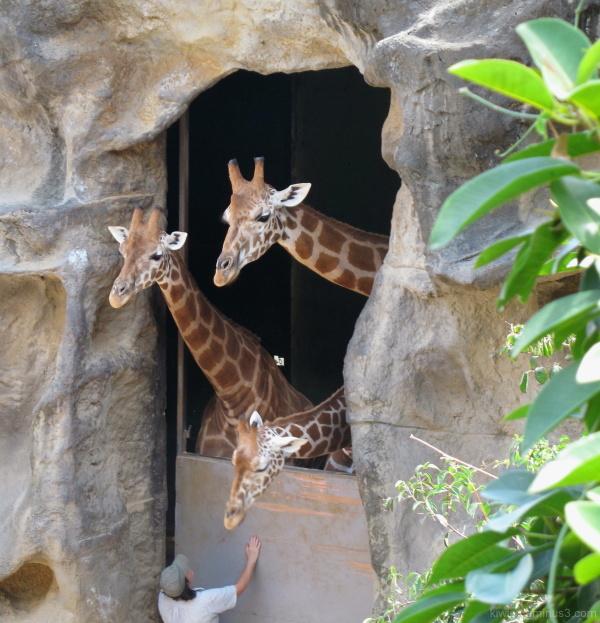 #3 Taronga Zoo, Sydney