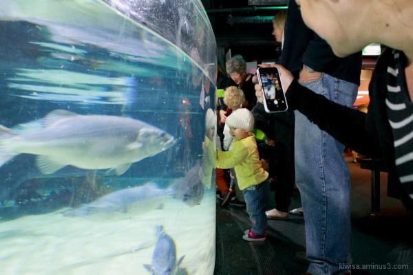Child meets fish