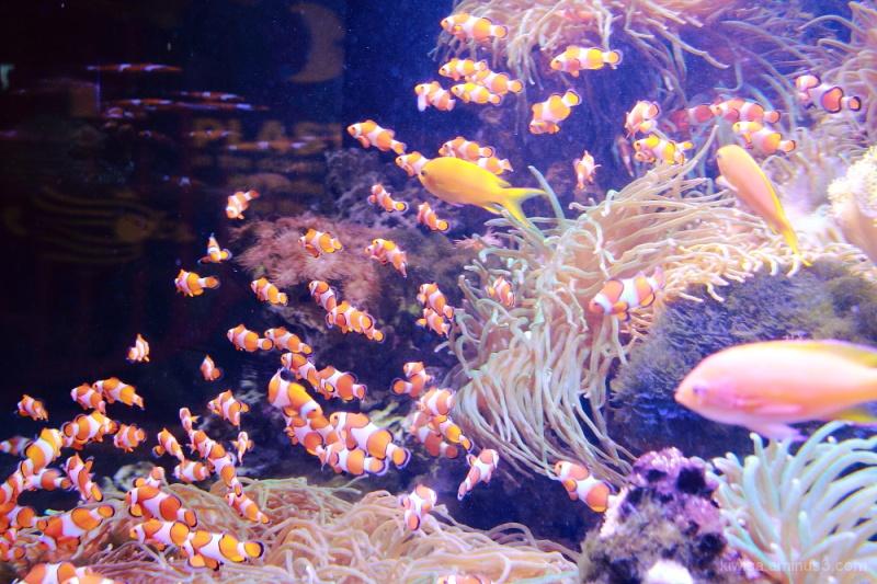 I found Nemo...s