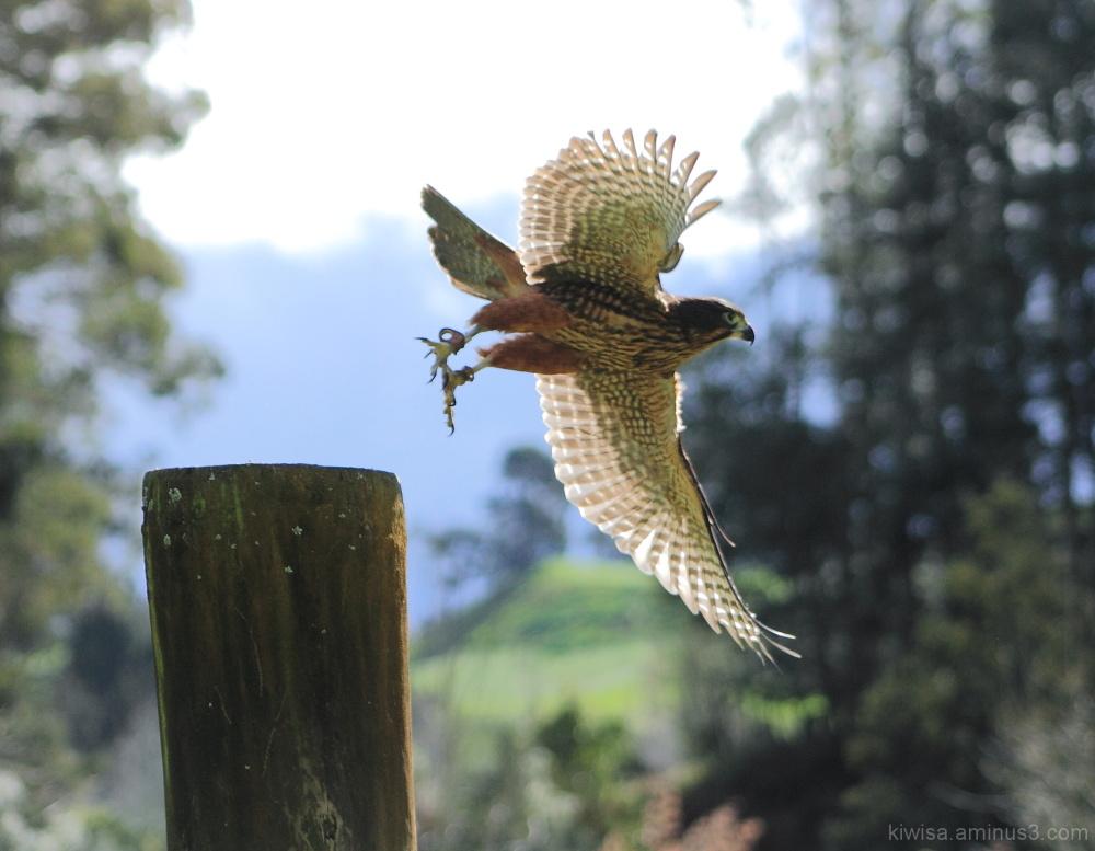 Visit to Wingspan