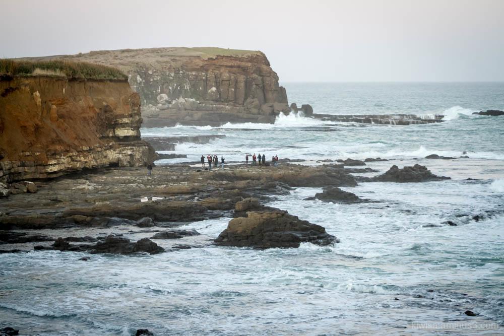 Curio Bay spectators