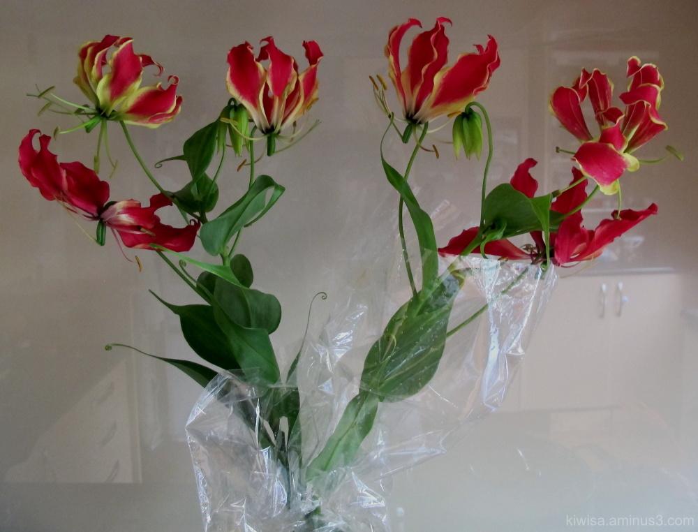 #2 Flame lilies