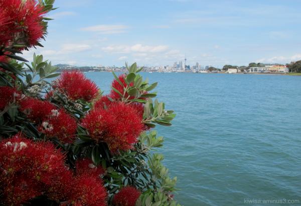 NZ Christmas flower