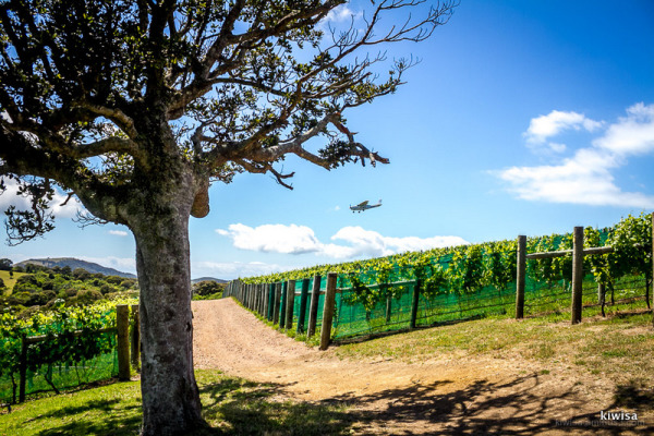Plane flying over the vineyard
