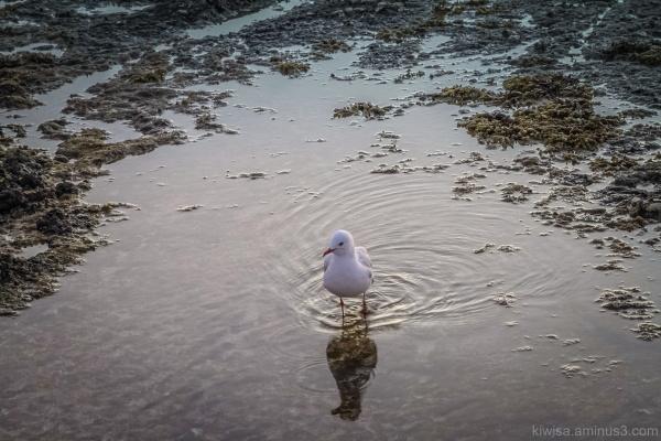 Seagull bath
