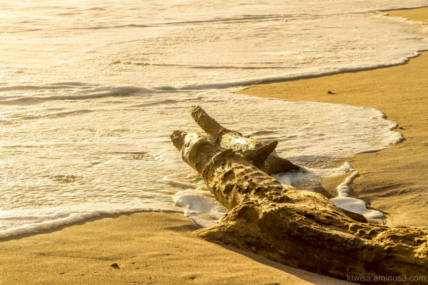 Washed up log