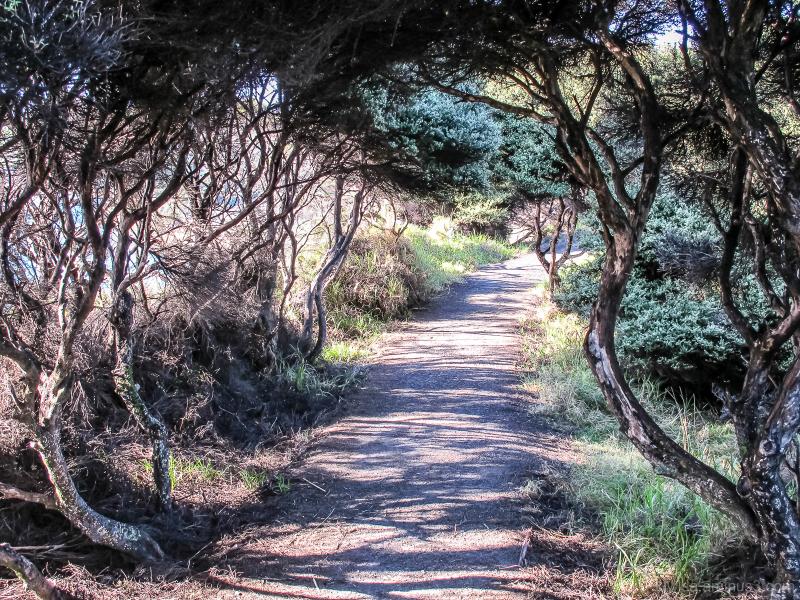 Walking through the bushes
