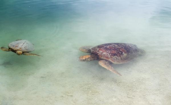Turtle sanctuary, Vanuatu