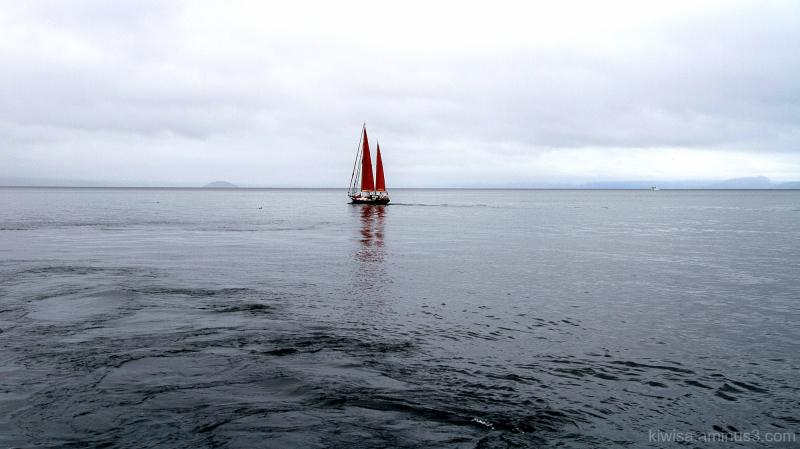 Red Sails on Lake Taupo